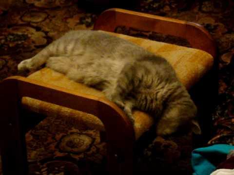 My cat - Bella 2