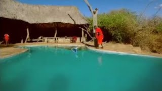 BBC: Lion Out of Africa? Luxury Lion Lodge
