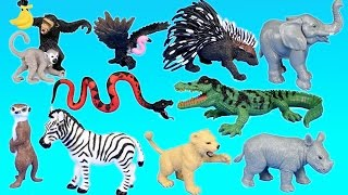 Jungle Adventure Wild Animals Playset For Kids - Animal Toys Video
