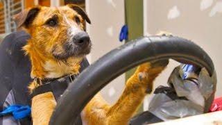 15 Smartest Animals