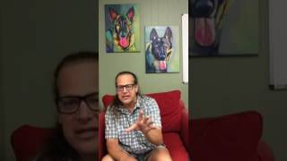 Dog Training   aggressive GSD arrived to Board & Trainer   Solid K9 Training Dog Training