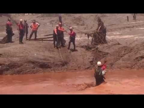 Bombeiros atravessam rio para salvar bois presos na lama