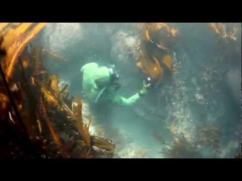Lobster diving in Laguna Beach