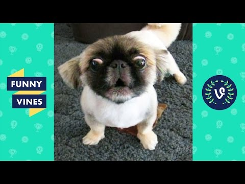 *Try Not To Laugh Challenge* | Funny Animals Vines Compilation