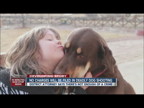 No charges to be filed in deadly dog shooting