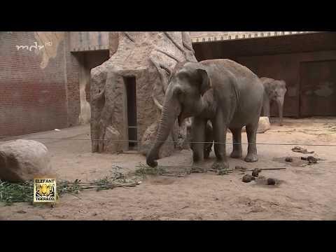 Trauer um den kleinen Elefanten
