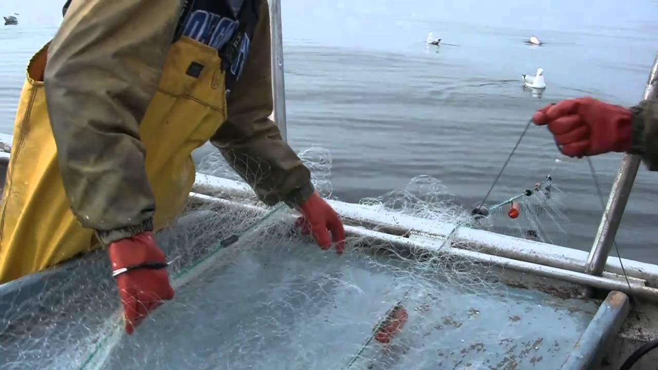 Lake superior fish the perennial plate episode 16 youtube for Fishing lake superior