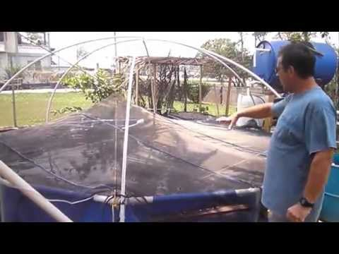 DIY home Aquaponics Fish farm Belize