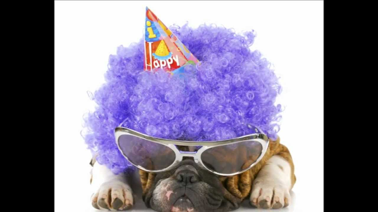 Happy Birthday Dogs Video YouTube