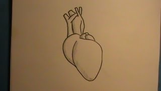 How to Draw a Real Human Heart