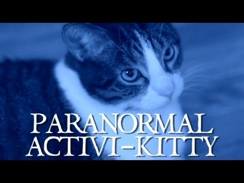 Paranormal Activi-kitty (Comedy Thunder)