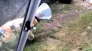 Funny German Shepherd Dog. Cone - o - War. Cute Kid Fail.