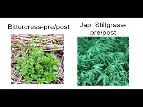 Controlling Weeds in your Lawn, in your Garden, and in your Landscape