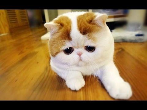 Няшные котейки! Умиление!