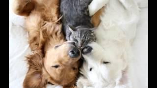 Watch Nik Kershaw How Sad video