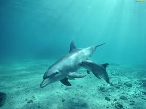 Песни дворовые - Дельфиненок