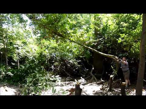 Langley Park Conservation video tree felling.wmv