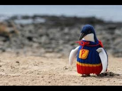 Australia's Oldest Man Knits Sweaters For Penguins Affected By Oil Spills