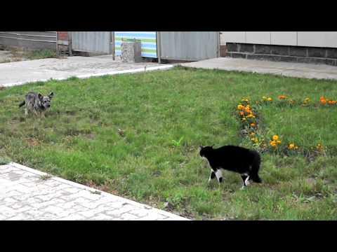 Dog vs. Cat vs. Ennio Morricone
