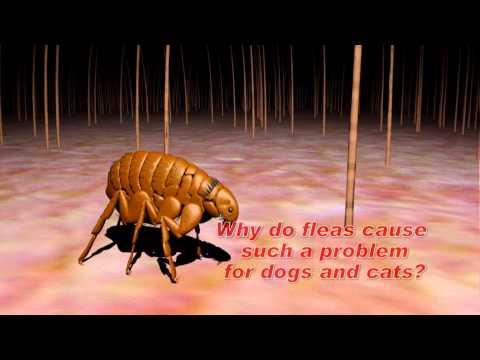 Understanding Flea and Tick Control