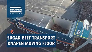 Sugar beet transport with Knapen Trailers