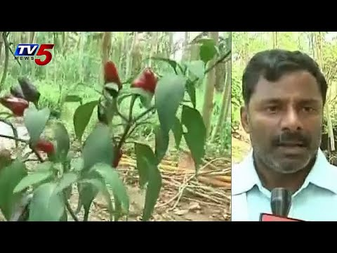 The importance of native seeds and preserving methods | Annpoorna : TV5 News