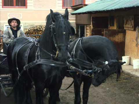 Caii lui Mihăiţă