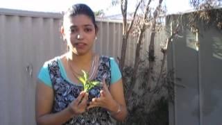 Radish and Raddish Leaves