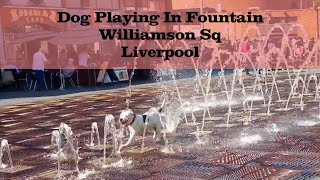 Dog playing in Water Fountain, Williamson Sq, Liverpool