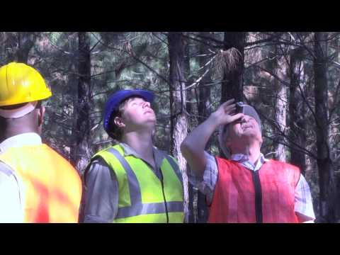 WOF TV NEWS EPISODE 49 - 14th World Forestry Congress SA