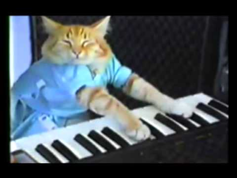 Kanye Interrupts Keyboard Cat! *Original*