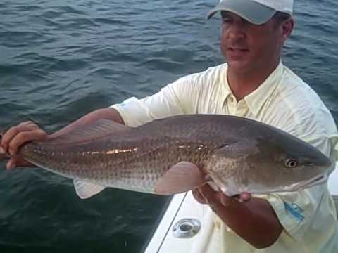 Captain Brook Wallace, live release Redfish. Bradenton, FL Video