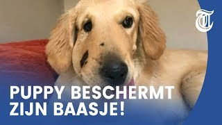 Heldenactie puppy gaat viral