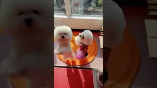 Look at these cute and funny puppies dogs 1689