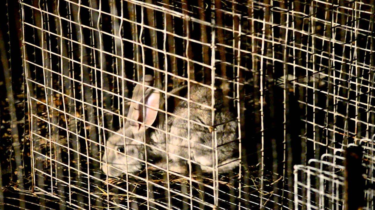 Капкан для кролика