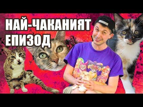 Здравейте, аз съм Станко и имам 4 котки! - Епизод 1