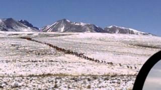 Elk migration  to the Sangres.