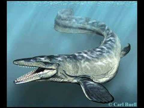 Mosasaur video Video