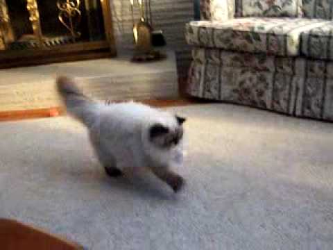 Fetching Cat