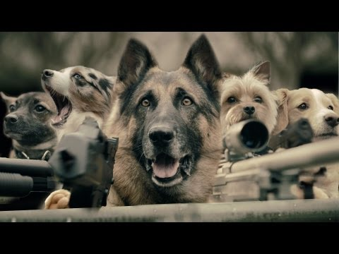 The Last Cat on Earth - Music Video (ft. Call of Duty Dog)