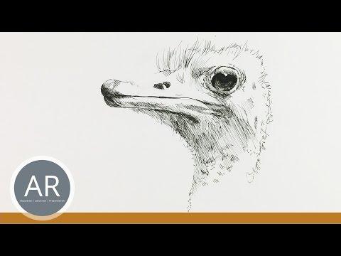 Tiere zeichnen lernen. Tier-Porträts. Tierzeichnungnen. Mappenvorbereitungskurs Kunst