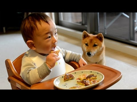 柴犬ゴン太とふみ君26 好きな食べ物編 Shiba Inu & Baby