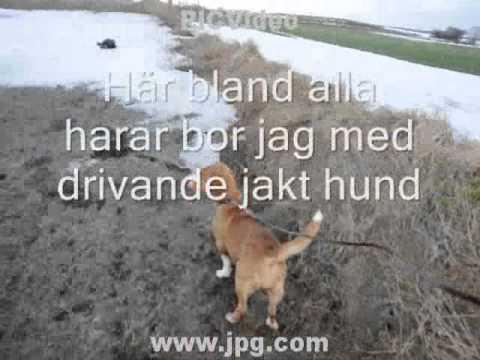 Harar i Skåneland.wmv
