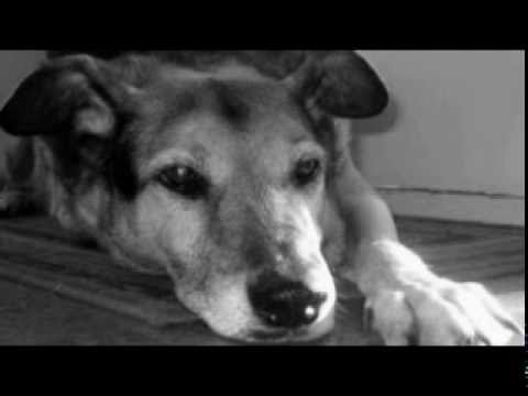Old Grey Dog Song