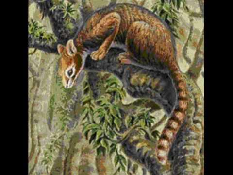 The Evolution of Felidae