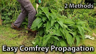2 Methods of Comfrey Propagation