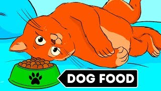 Why Cats Can't Eat Dog Food