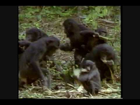 Out In Nature: Homosexual Behavior In The Animal Kingdom (2 Of 6) video
