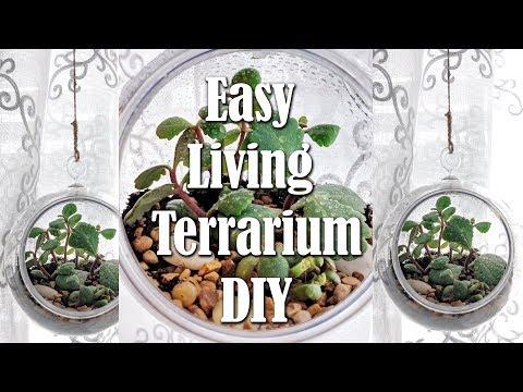Dollar Tree Hanging Terrarium with Living Succulents DIY Easy Living Decor