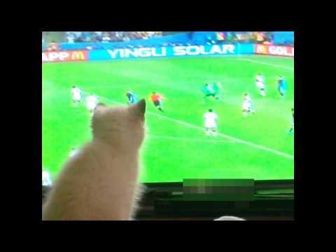 La gatita mas linda viendo futbol / kitten watching football